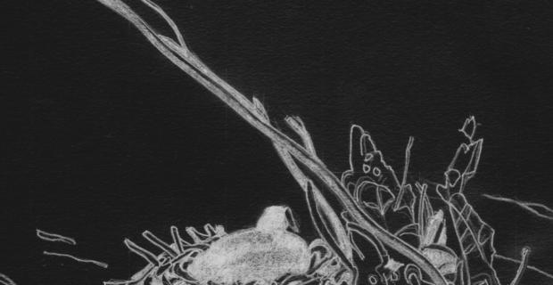 Tekening: Meerkoet